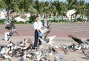 Hiện trường - Người đàn ông cho ngàn chim bồ câu ăn trên Công viên Biển Đông