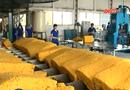 An ninh TV - Xử lý sai phạm tại Tập đoàn công nghiệp cao su Việt Nam