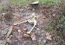 Tin trong nước - Huế: Phát hiện một bộ xương người trong rừng