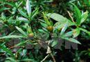 Tin trong nước - Khánh Hòa: Tìm thấy ba loài thực vật mới tại đảo Hòn Bà