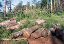 Tin trong nước - Dừng khai thác gỗ rừng tự nhiên trên cả nước