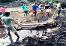 Video-Hot - Video: Cá sấu khổng lồ bị hàng chục người vây bắt