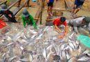 Thị trường - Giá cá tra có xu hướng tăng trở lại