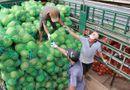Thị trường - Thương lái Trung Quốc gom hàng, dừa khô