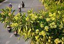 Ăn - Chơi - Những loài hoa