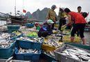 Tin trong nước - Đánh bắt, tiêu thụ hải sản 4 tỉnh: Lập bản đồ vùng biển cấm!