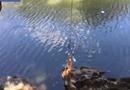 Video-Hot - Đu dây tắm sông, cô nàng nện vào rìa đá