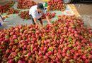 Thị trường - Năm nay, rau quả Việt dự kiến xuất ngoại 2,5 tỷ USD