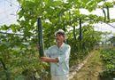 Bí quyết làm giàu - Sống sung túc nhờ trồng rau sạch