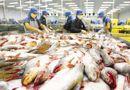 Thị trường - Giá cá tra tăng cao nhất kể từ đầu năm nhưng vẫn khan hàng