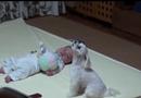 Video-Hot - Phản ứng đáng yêu của chó cưng khi thấy bé khóc