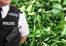 Gia đình - Tình yêu - Chồng báo cảnh sát vì vợ cho con ăn chay