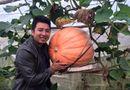 Thị trường - Bí ngô khổng lồ, 5 triệu/quả khách tranh nhau mua trang trí Halloween
