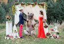 Gia đình - Tình yêu - Cặp đôi nhờ gấu làm chứng trong hôn lễ