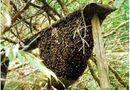 Sức khoẻ - Làm đẹp - Nam thanh niên bị ong đốt tử vong