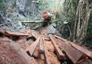 """Tin trong nước - Truy tìm """"đầu nậu"""" phá nát rừng đặc dụng Phong Quang"""