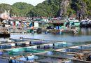 Thị trường - Xuất khẩu thủy sản đạt trên 5,73 tỷ USD