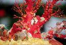 Những điều thú vị về san hô bạn chưa biết