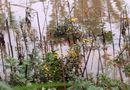 Tin trong nước - Huế: Người dân khóc ròng trên vườn hoa tết xơ xác sau lũ dữ