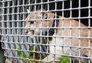 Cộng đồng mạng - Người đàn ông dũng cảm đấm vào mặt báo sư tử để cứu chó cưng