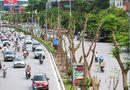 Tin trong nước - Hà Nội trồng 800.000 cây xanh dịp Tết Nguyên đán 2017