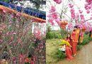 Đời sống - Xuân Đinh Dậu: Rực rỡ chợ hoa dịp tết Nguyên Đán