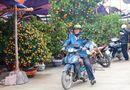 Dịch vụ chở hoa, cây cảnh thu tiền triệu mỗi ngày trong dịp tết