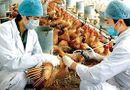 Sức khoẻ - Làm đẹp - Cảnh báo nguy cơ cúm A/H7N9 xâm nhập từ Trung Quốc vào Việt Nam