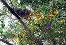Tin trong nước - Người đàn ông tử vong tại chỗ vì bị đàn ong rừng tấn công