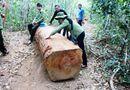An ninh - Hình sự - Điều tra vụ lâm tặc táo tợn cướp gỗ bất chấp lực lượng kiểm lâm nổ súng