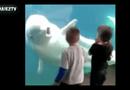 Video-Hot - Hai bé thất thanh khi bị cá heo trắng hù dọa