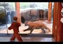 Video-Hot - Cậu bé rạng rỡ đùa cợt cùng