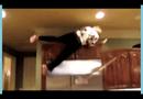 Video-Hot - Người đẹp trả giá vì trèo lên nóc tủ