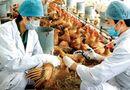 Kinh doanh - Chặn dịch cúm gia cầm từ Trung Quốc: Cấm hoàn toàn gia cầm qua biên giới