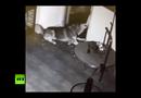 Video-Hot - Chó phá chuồng sắt,