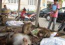 Tin trong nước - Giải cứu hàng chục khỉ bị nhốt ở khách sạn, quán karaoke