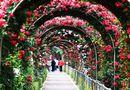 Ăn - Chơi - Du khách thất vọng vì lễ hội hoa hồng Bulgaria không như quảng cáo