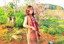 """Tin tức - Phó Giám đốc Sở Tư pháp Bình Thuận lên tiếng vụ """"bẻ hoa anh đào chụp ảnh"""""""