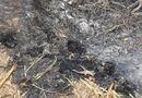 Tin trong nước - Ngã xuống hố đốt rác, cụ bà 80 tuổi tử vong