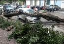 Tin trong nước - Hà Nội: Nhiều cây xanh bị đổ vì không có rễ