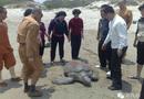 Đời sống - Mua rồi phóng sinh con rùa biển bị sa lưới, người đàn ông nhận cái kết sau 16 năm
