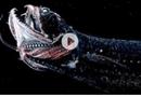 """Video-Hot - Những sinh vật kinh dị sinh ra tại khe nứt """"địa ngục"""" thế giới"""