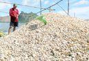 Tin trong nước -  Nguyên nhân ban đầu làm cá, nghêu chết ở bờ biển Kiên Giang