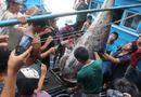 Tin trong nước - Cá ngừ vây xanh 307 kg đánh bắt ở Hoàng Sa lập kỷ lục Việt Nam