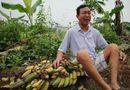 Pháp luật - Công an Hải Phòng lên tiếng vụ 3.000 cây chuối bị đốn hạ trong đêm