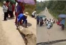 Tin trong nước - Làm rõ việc người dân ngồi che ô chờ xe tải chở lợn qua để xin tiền