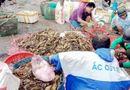 Tin trong nước - Chưa tìm ra nguyên nhân tôm hùm chết hàng loạt ở Phú Yên gây thiệt hại 700 tỷ đồng