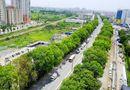 Tin trong nước - Hà Nội xem xét chặt hạ, di chuyển hơn 1.300 cây xanh để làm đường