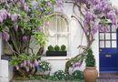 Gia đình - Tình yêu - Trồng những cây này, nhà đẹp như tranh, vừa mát lại tốt cho sức khỏe