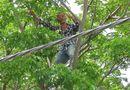 """Tin trong nước - Thanh niên nghi """"ngáo đá"""" la hét trên cây suốt 5 giờ đồng hồ"""
